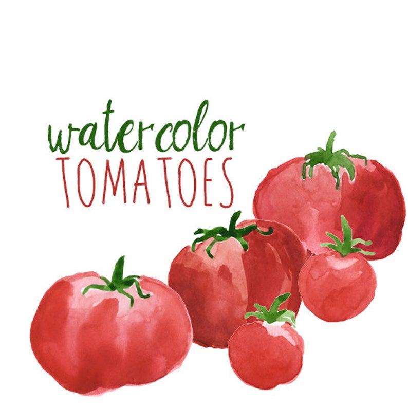 Clip art set veggies. Tomatoes clipart watercolor