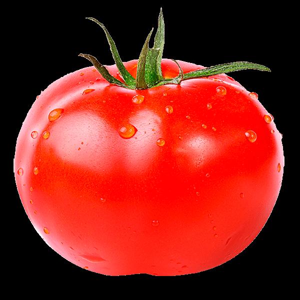 Tomatoes clipart watercolor. Resultado de imagem para