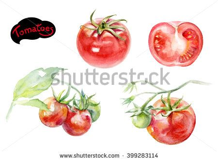Pin on tomato fest. Tomatoes clipart watercolor