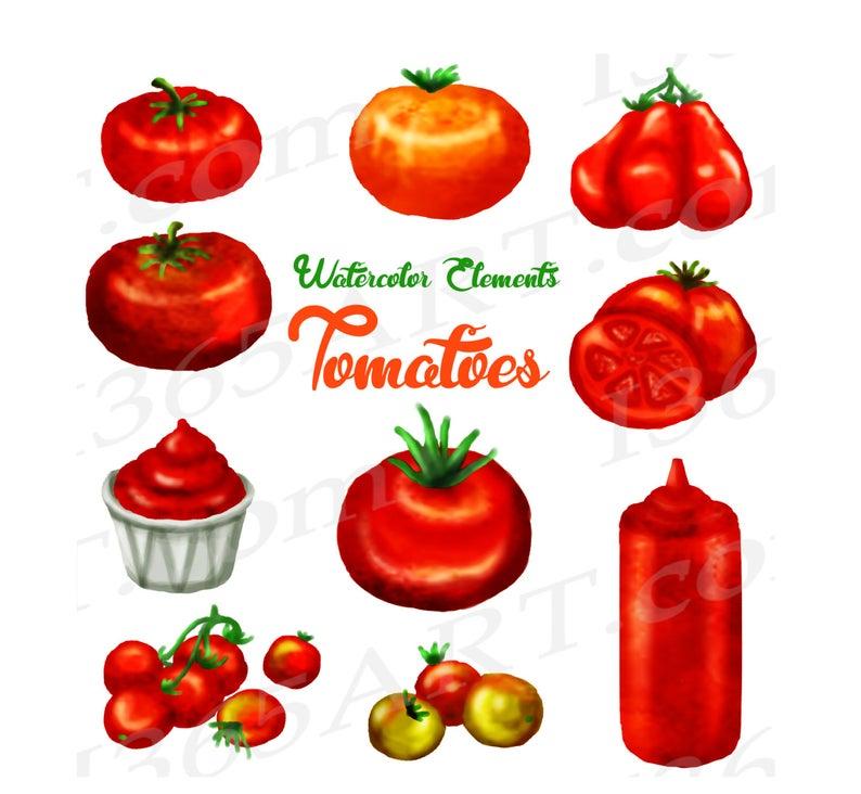 Tomatoes clipart watercolor.  off tomato clip