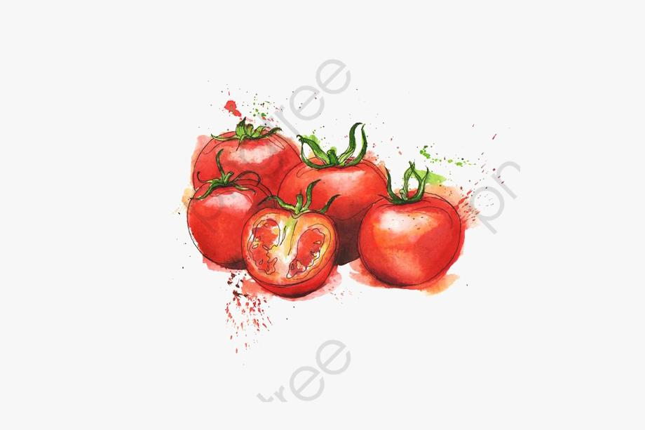 Tomatoes clipart watercolor. Tomato free