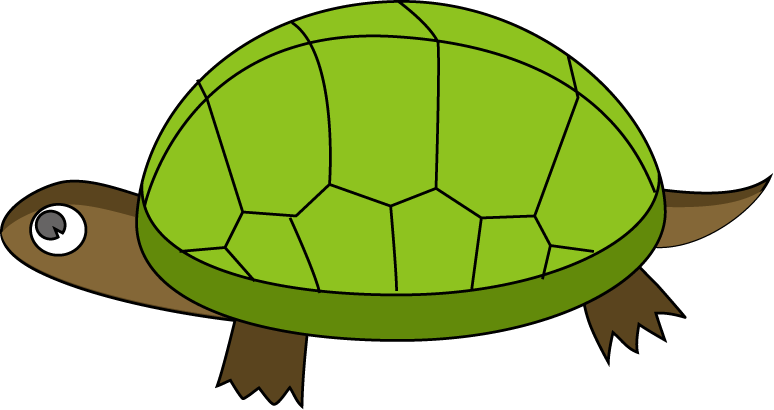 Tortoise . Shy clipart turtle