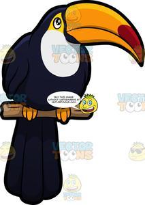 Toucan clipart bill. A
