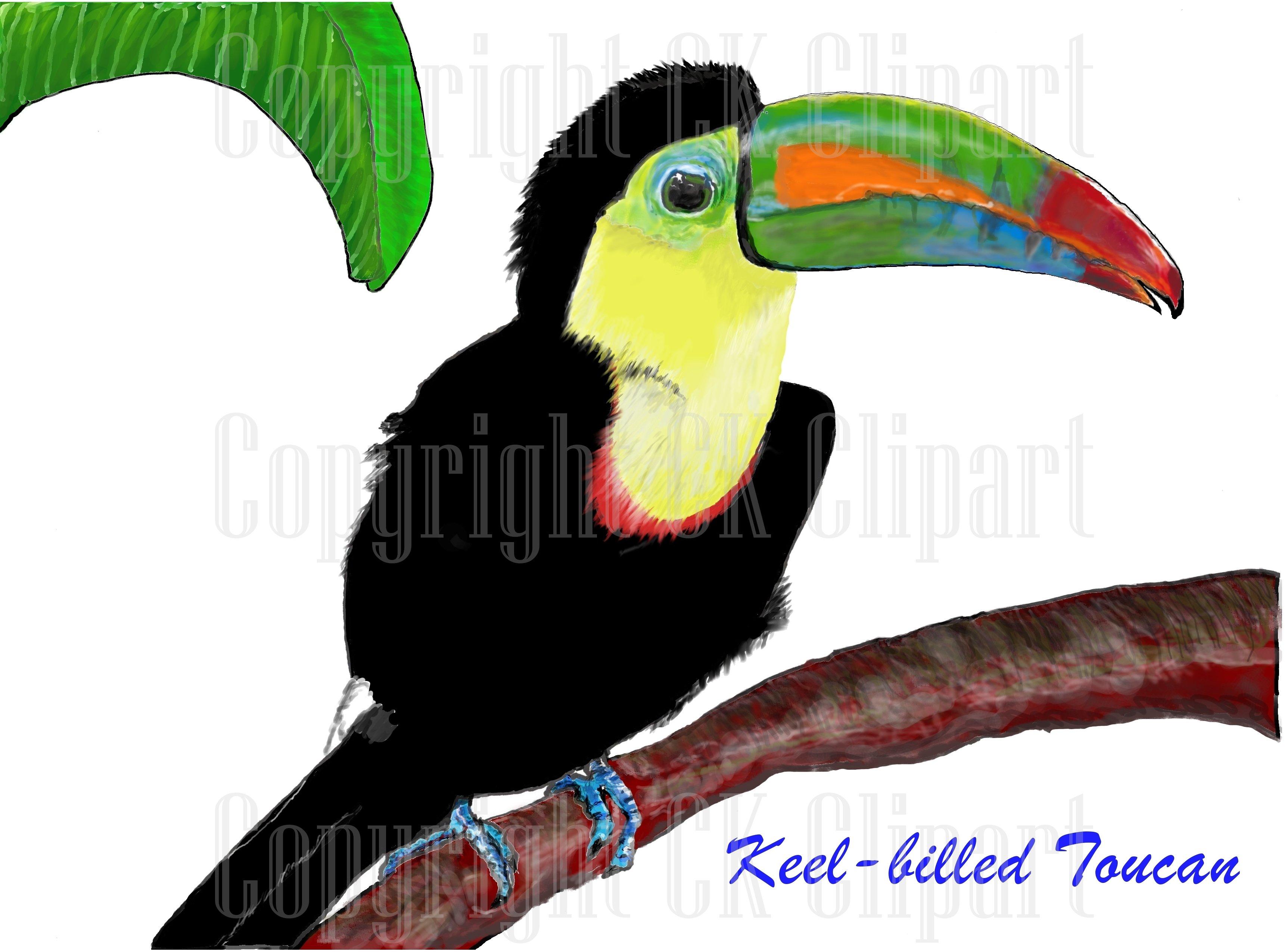 Keel ck . Toucan clipart bill