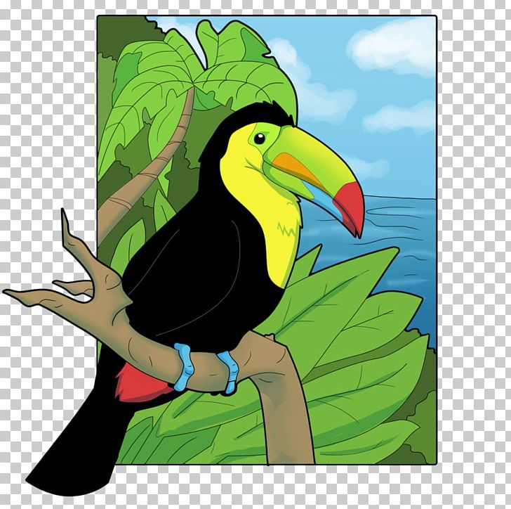 Beak keel billed drawing. Toucan clipart bill