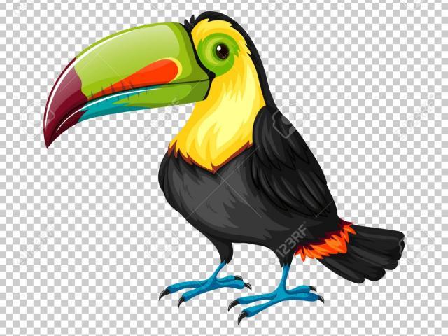 Toucan clipart kawaii. Free download clip art