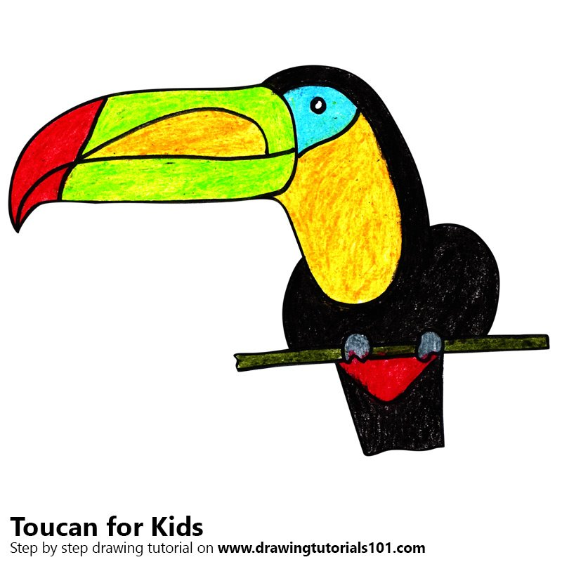 Toucan clipart kid. Learn how to draw