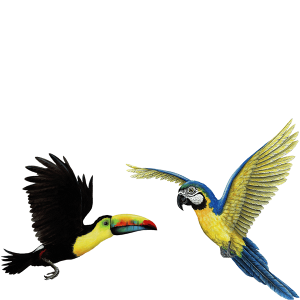 Birds wall stickers combo. Toucan clipart tropical parrot