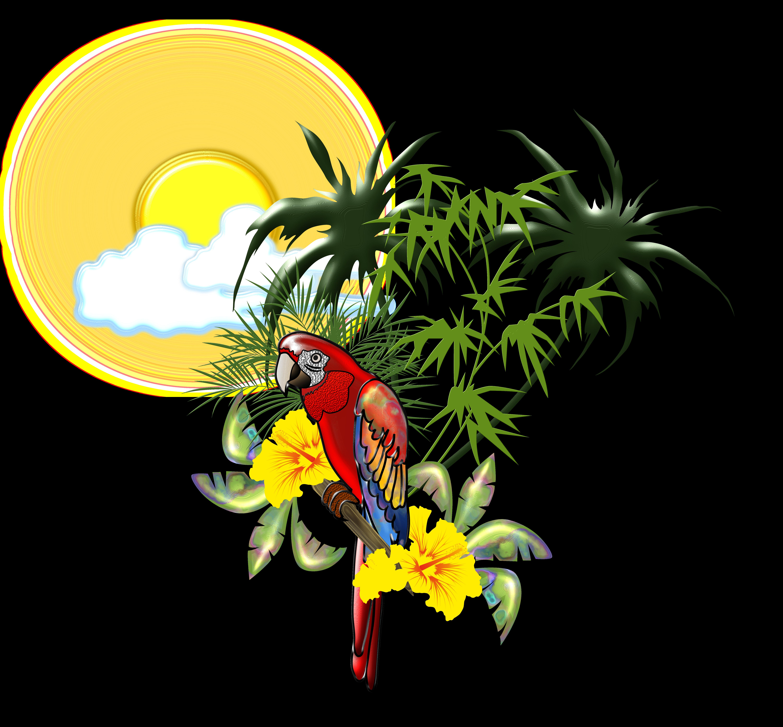 toucan clipart tropical parrot