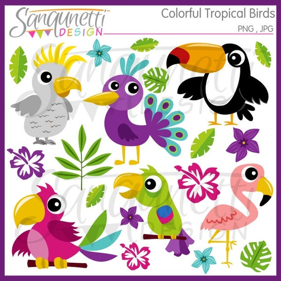 Birds flamingo instant download. Toucan clipart tropical parrot