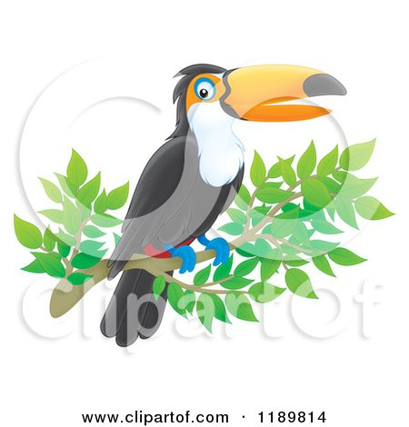 Toucan clipart tucan. Outline cartoon of a