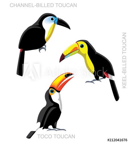 Toucan clipart vector. Bird set cartoon illustration