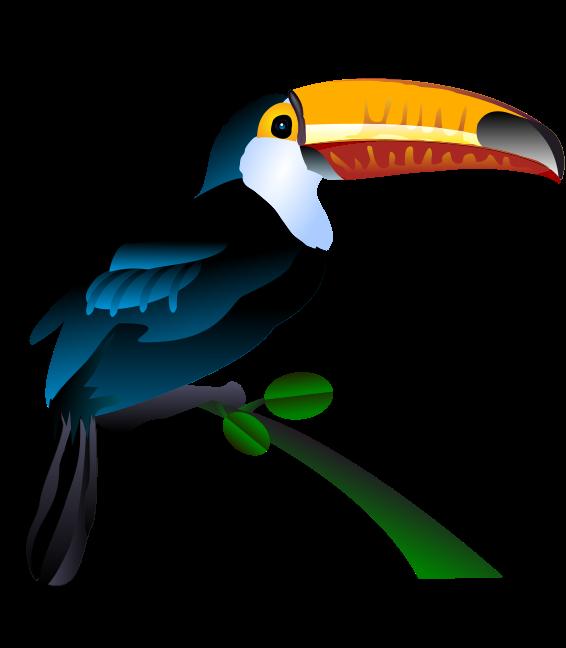 Toucan watercolor