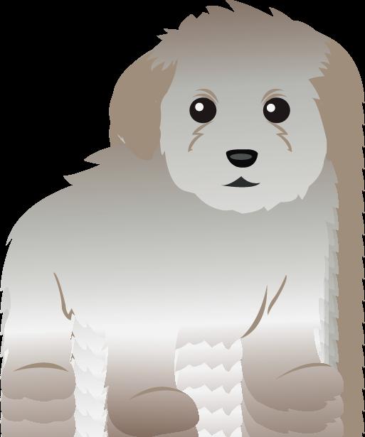 Toy clipart pet toy. Poodle