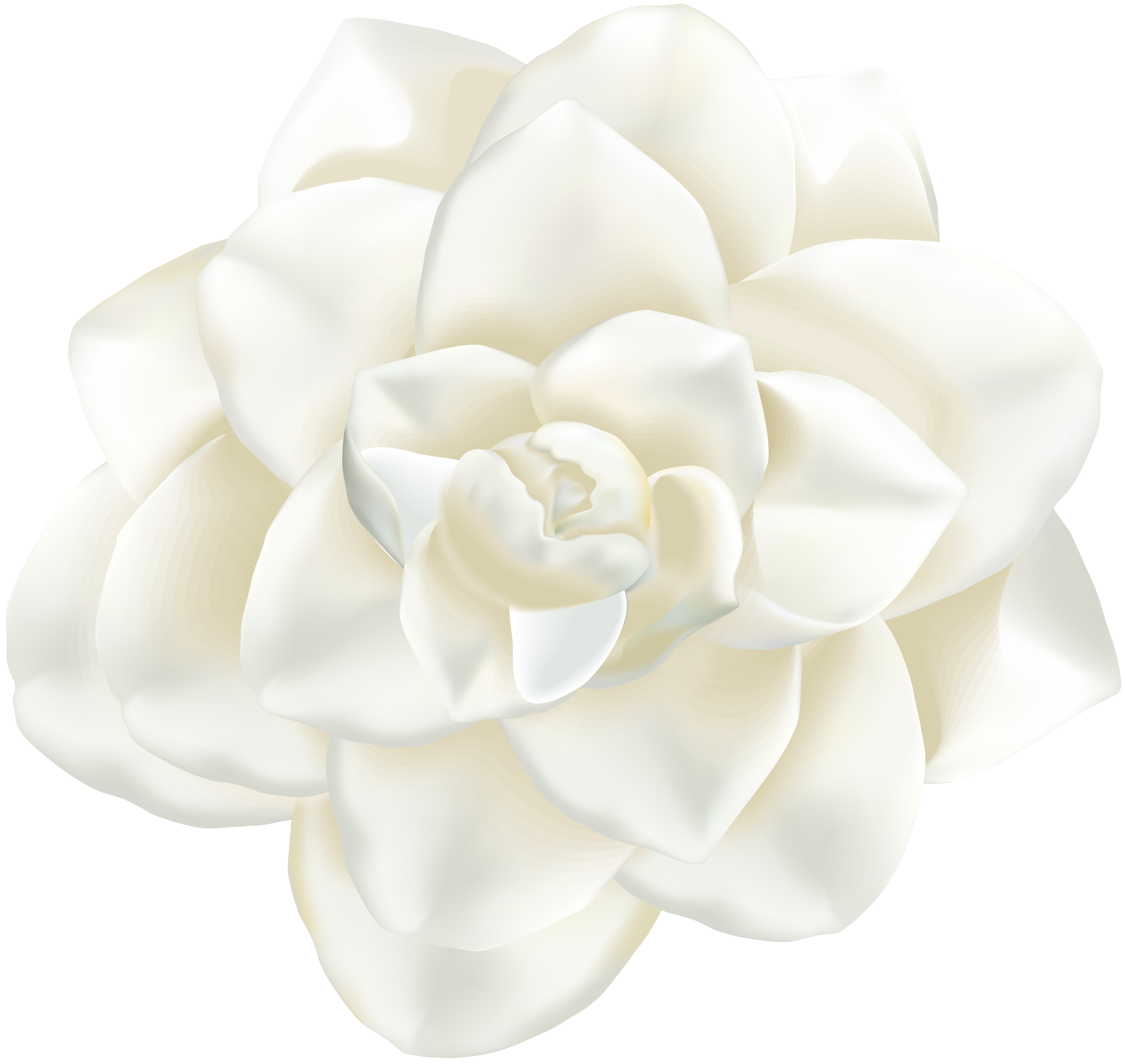 Clip art image gallery. White flower png
