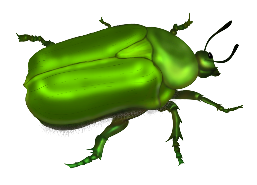 Trail clipart green ground. Beetle clipground bug