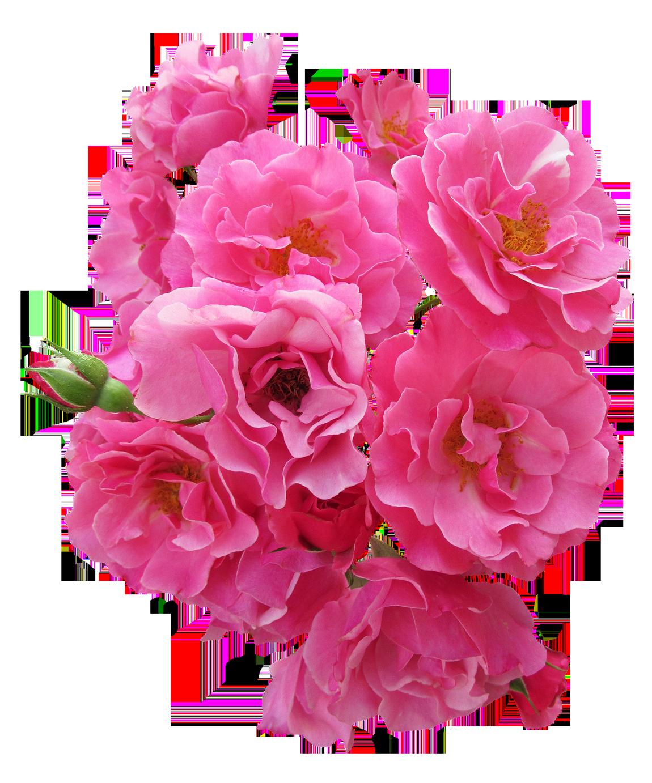Transparent flower png. Pink images pluspng pngpluspngcom