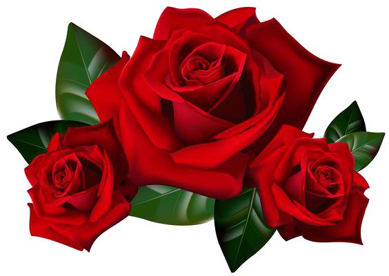 Rose free download pngmart. Transparent png images roses