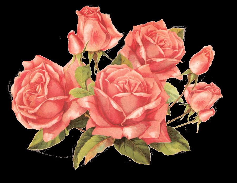 Rose stickpng bouquet of. Transparent png images roses