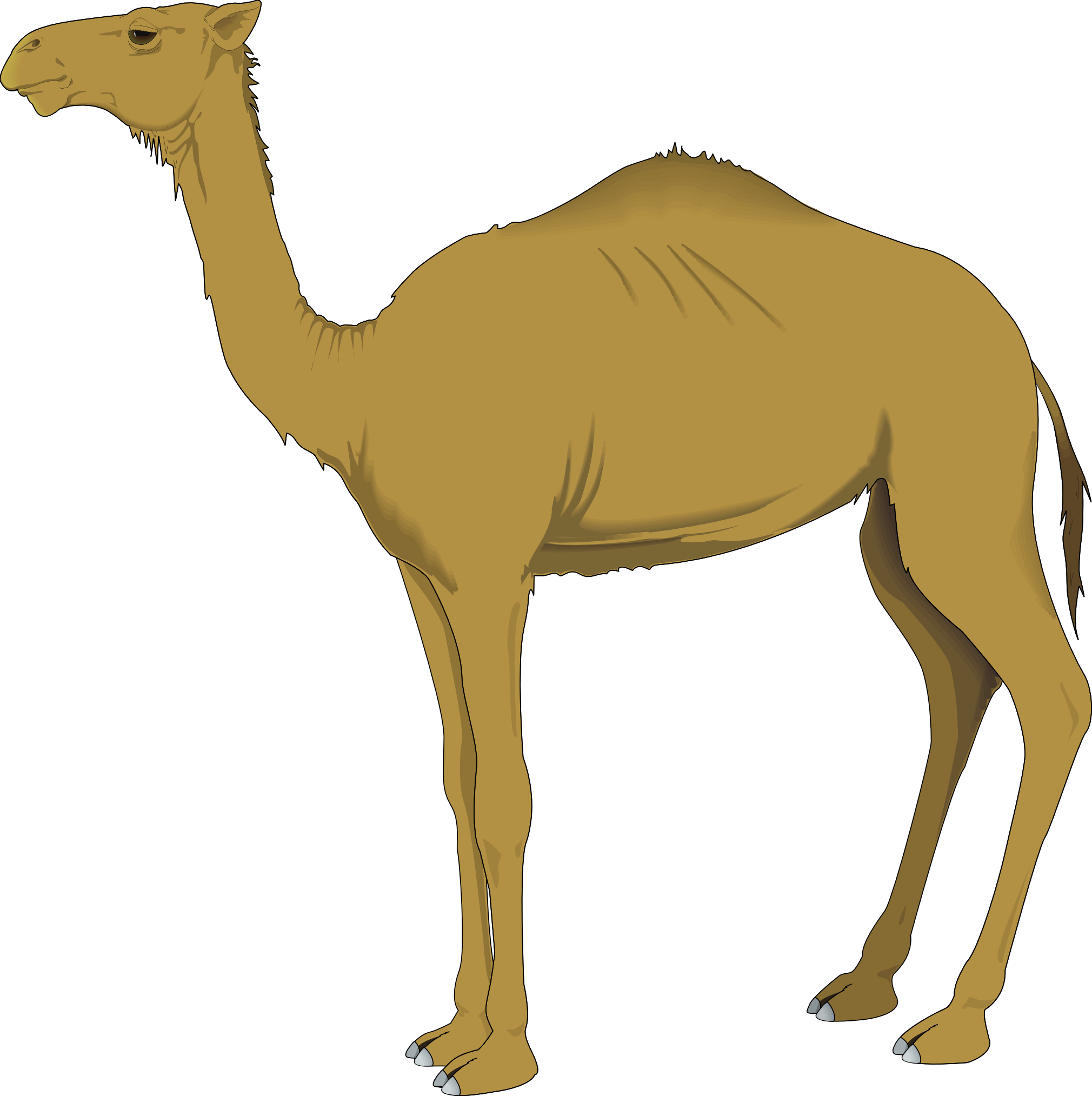 collection of svg. Camel clipart