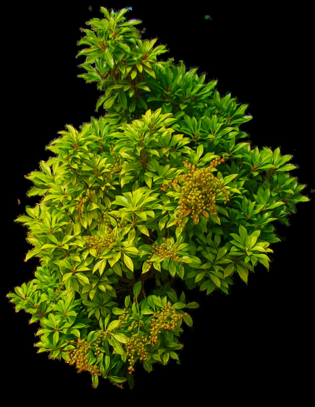 Flower plant png. Bushes clipart desert shrub