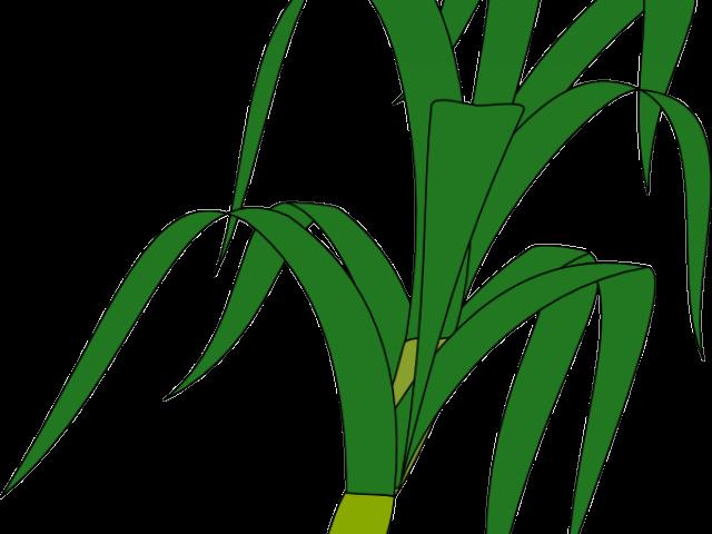 Tree clipart gumamela. Leaf free on dumielauxepices