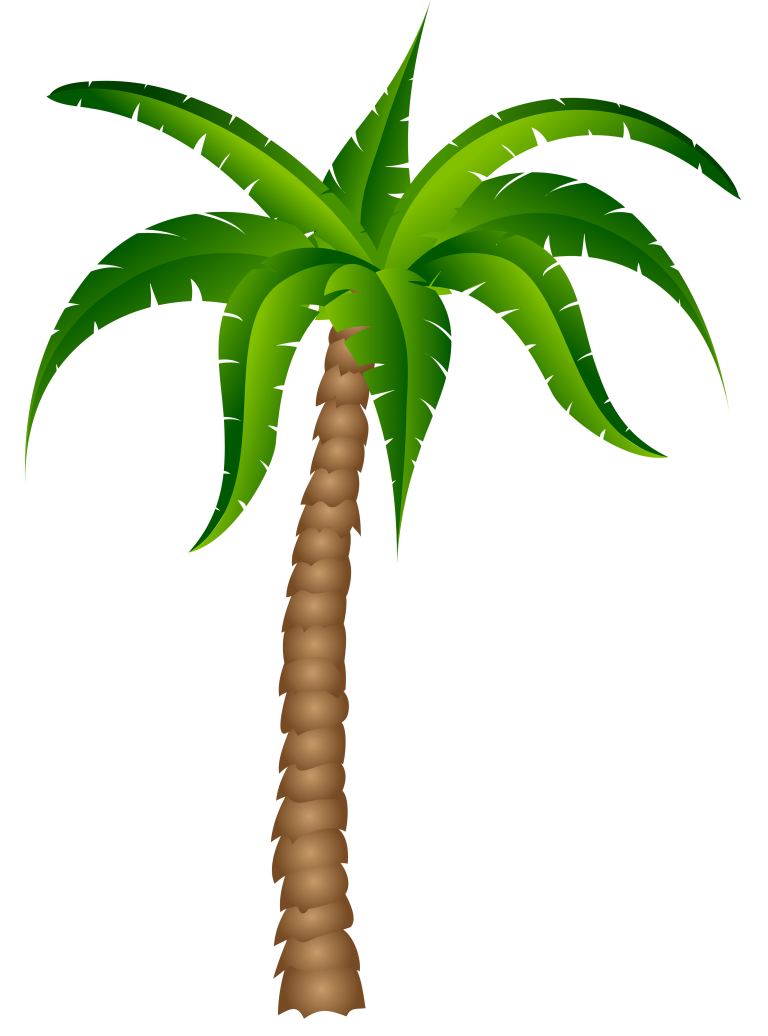 Palm best wikiclipart . Tree clipart pencil