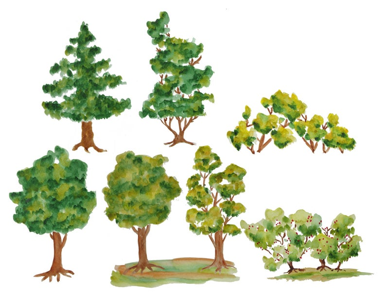 Trees wood illustration clip. Tree clipart watercolor
