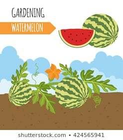 Portal . Watermelon clipart tree