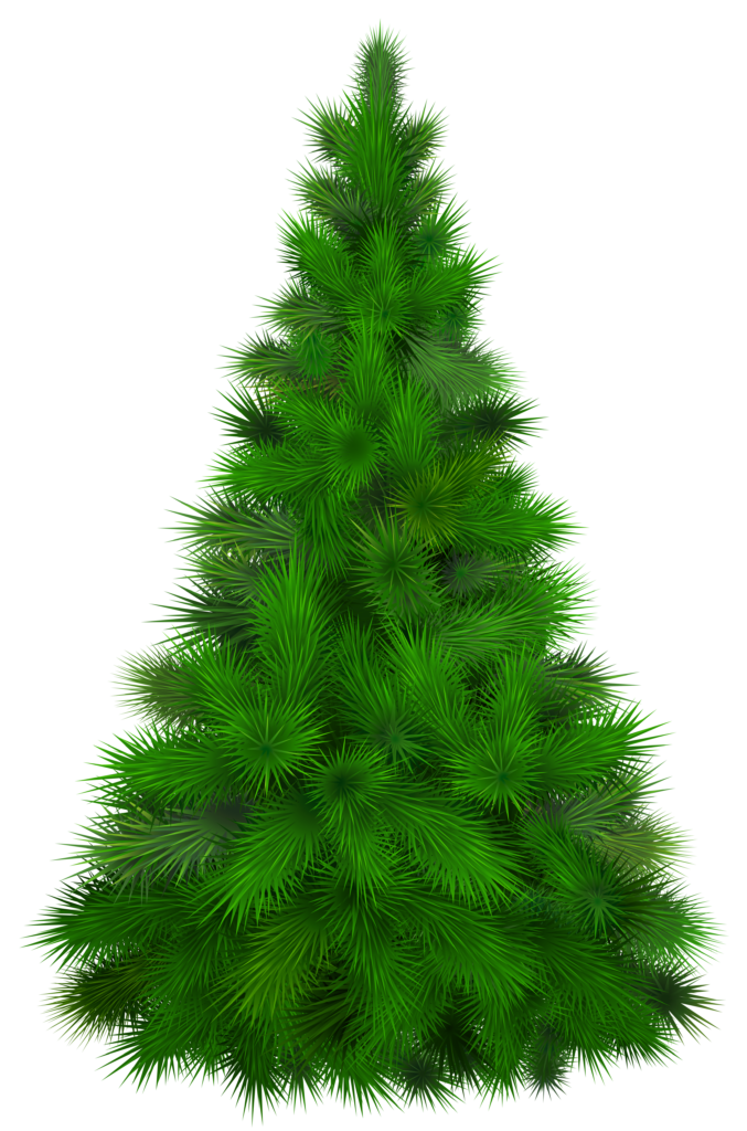 Tree clipart wedding. Green pine png clip