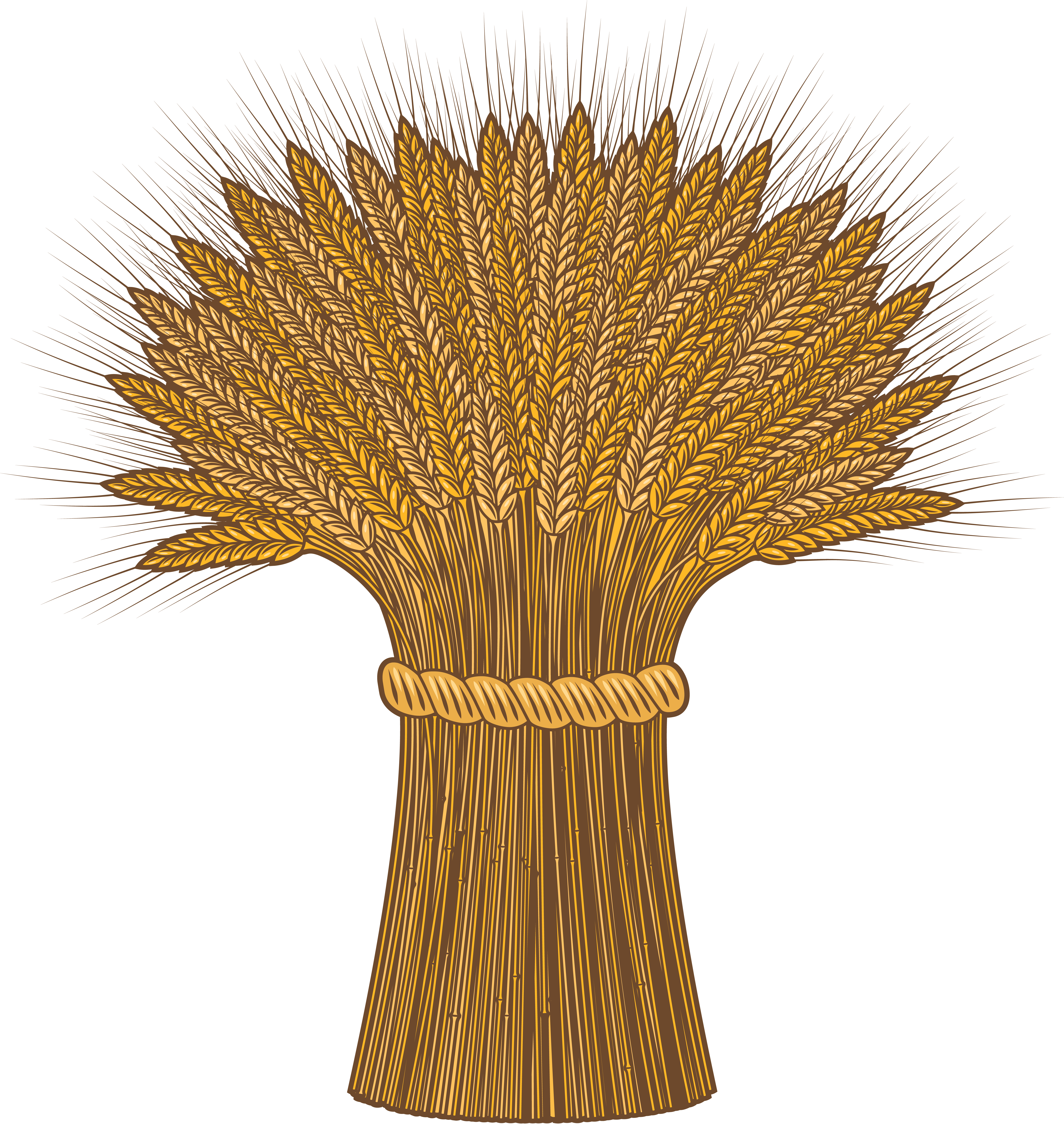 Png image purepng free. Wheat clipart green