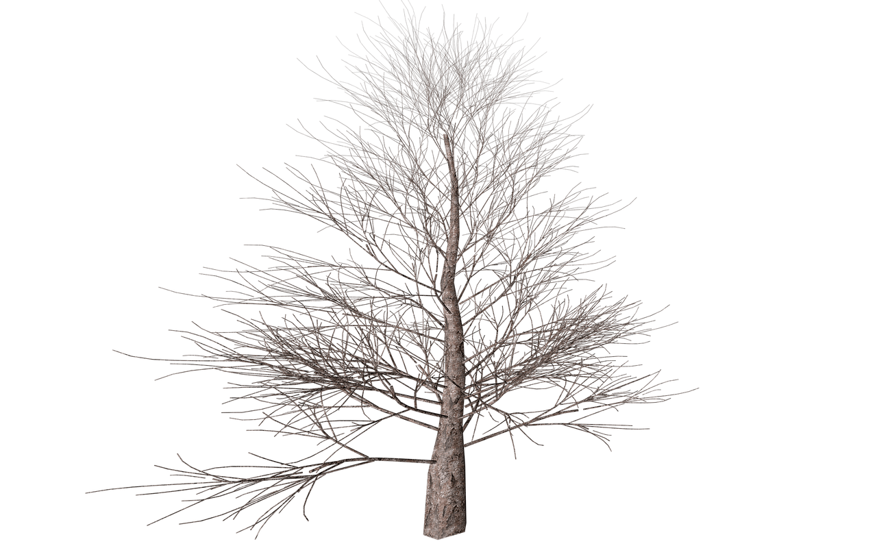Transparent png stickpng. Tree clipart winter