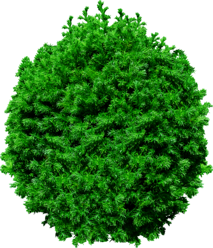 Tree vector png, Tree vector png Transparent FREE for