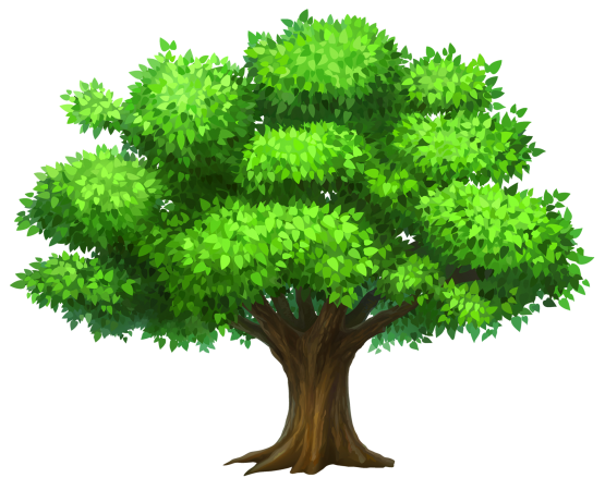 Pine wallpaper high definition. Tree vector png