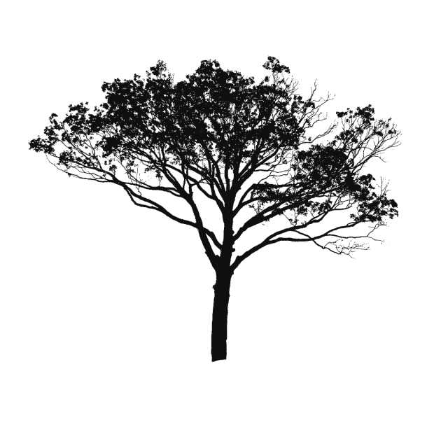 Black and white clipart. Tree vector png