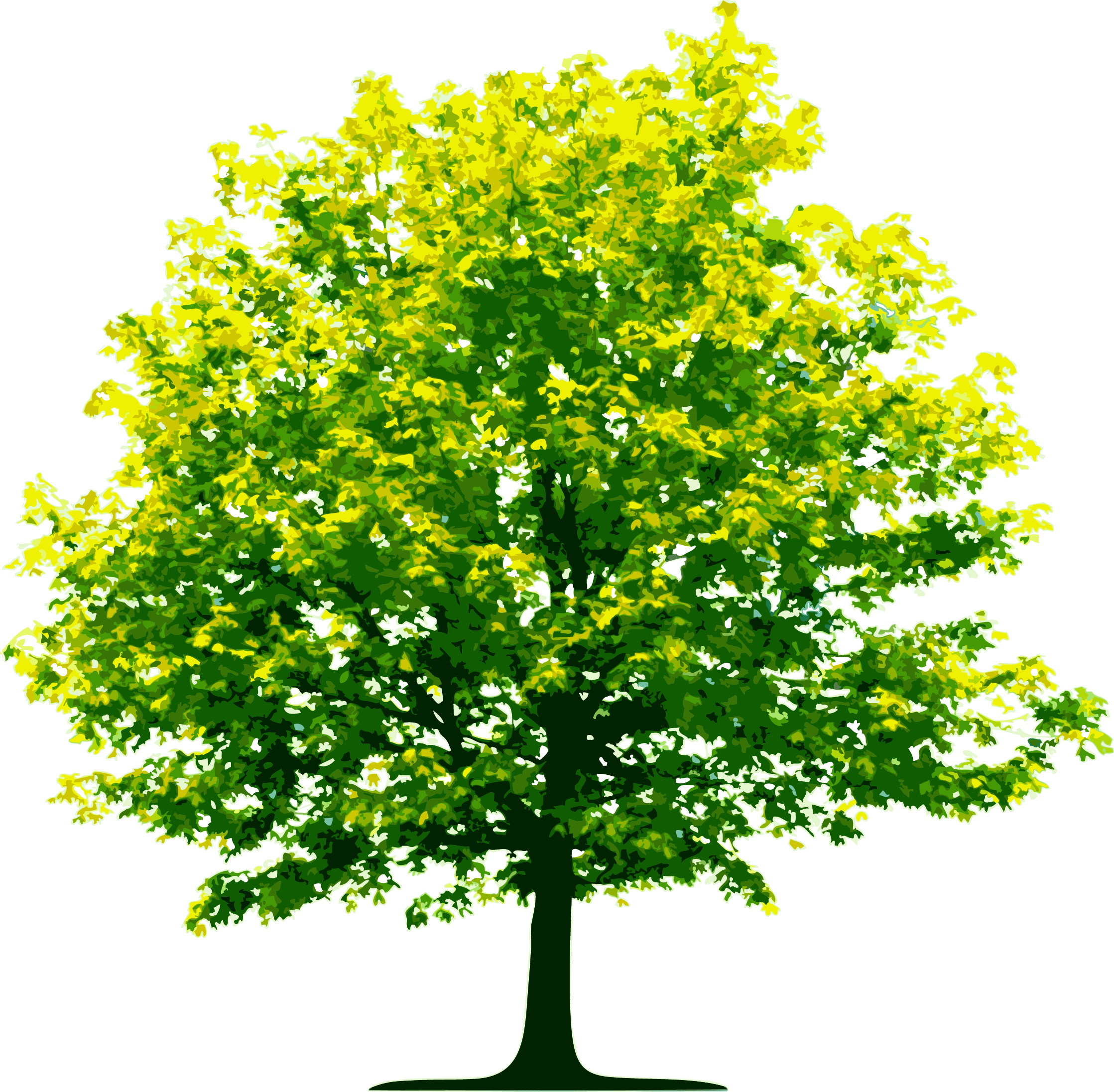 Trees png images. Download tree image picture