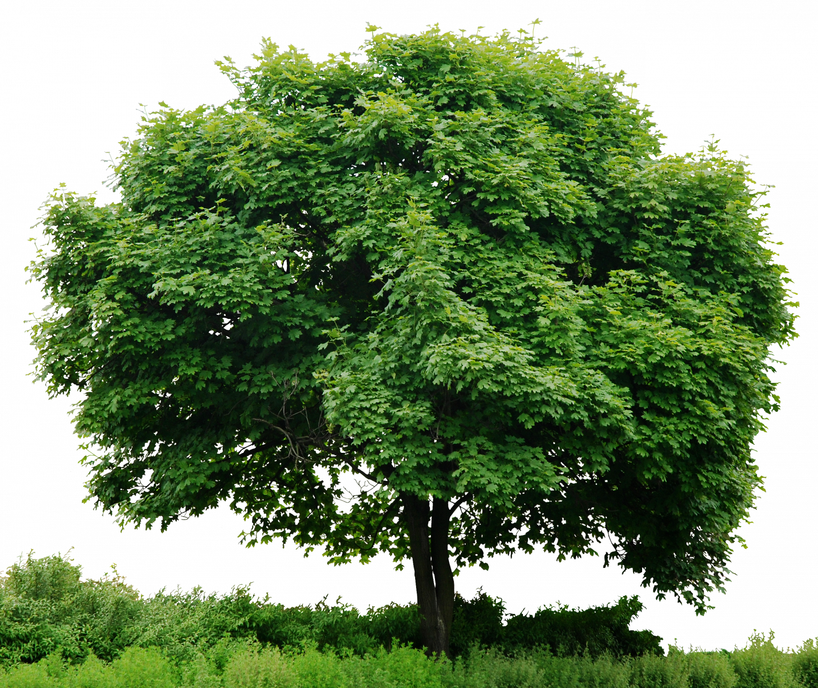 Trees png images. Tree free icons and