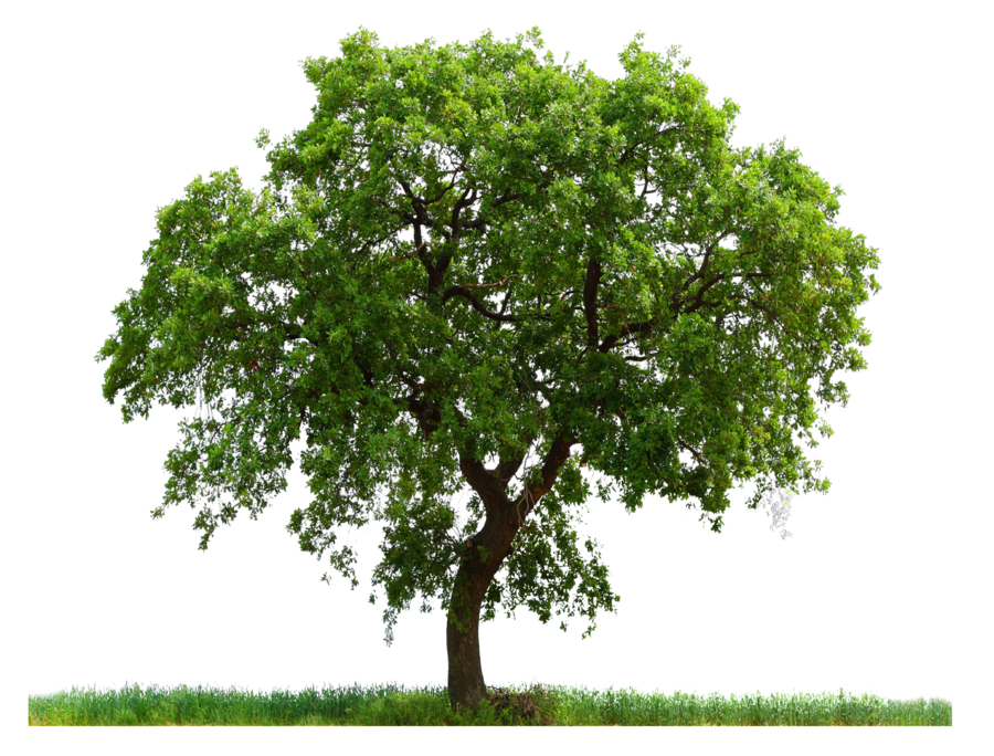 Tree ab by moonglowlilly. Trees png images