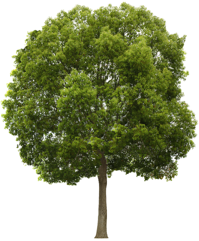 Download tree free transparent. Trees png images