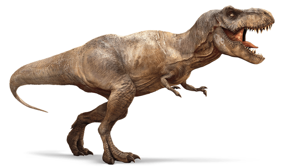 T rex png hd. Trex clipart triceratops