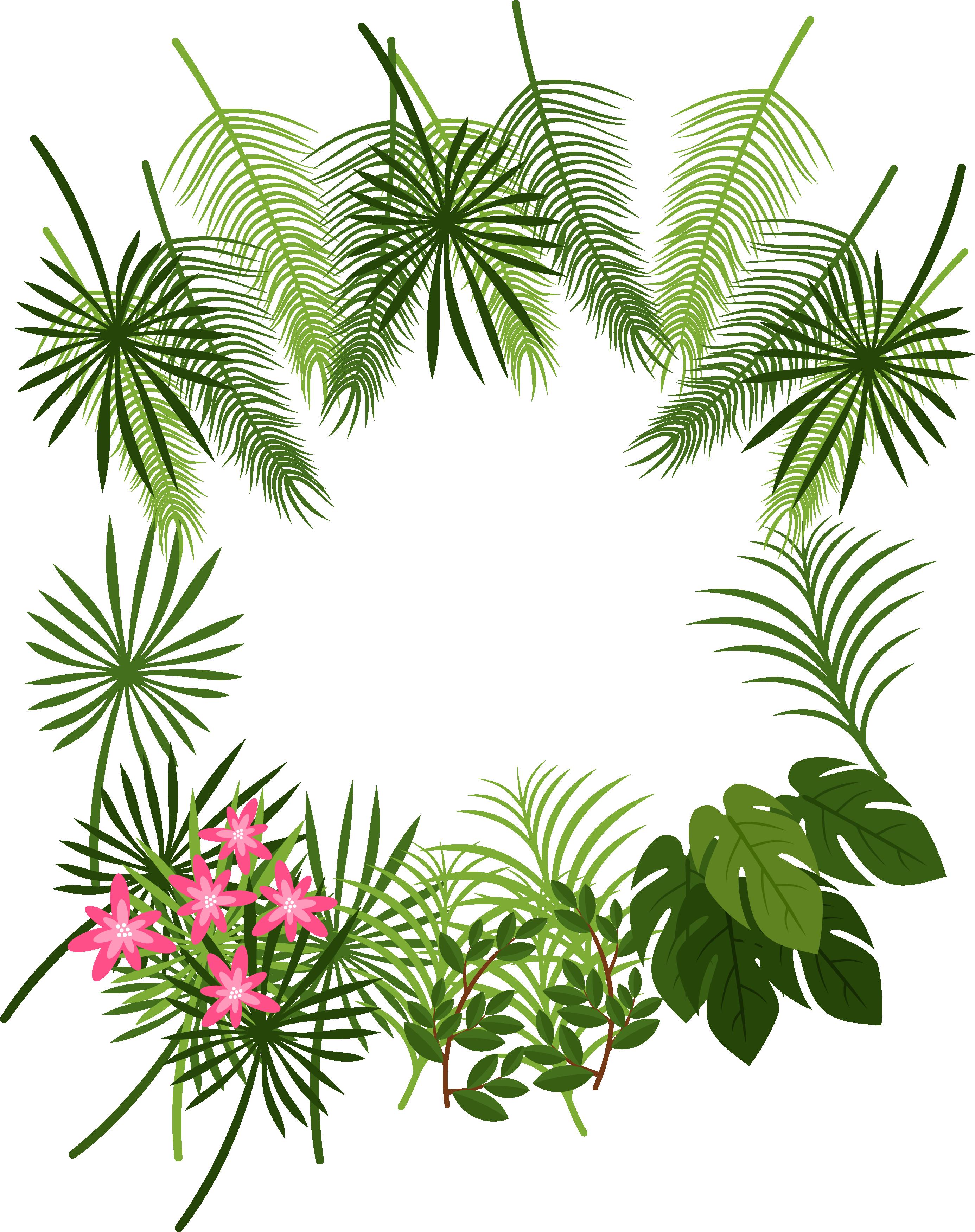 Arecaceae leaf tropics plant. Tropical border png