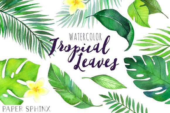 Watercolor tropical illustrations creative. Leaves clipart