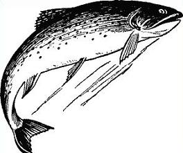 Trout clipart. Jpg