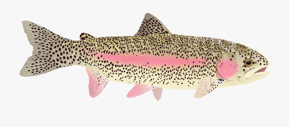 Free cliparts on . Trout clipart arctic cod
