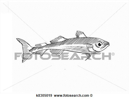 Pen drawing of an. Trout clipart arctic cod
