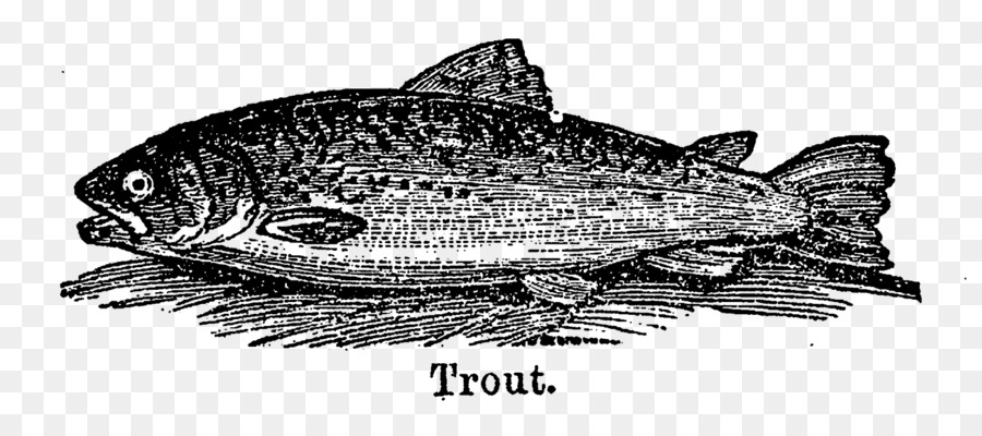 Trout clipart carp. Sardine fish products salmon