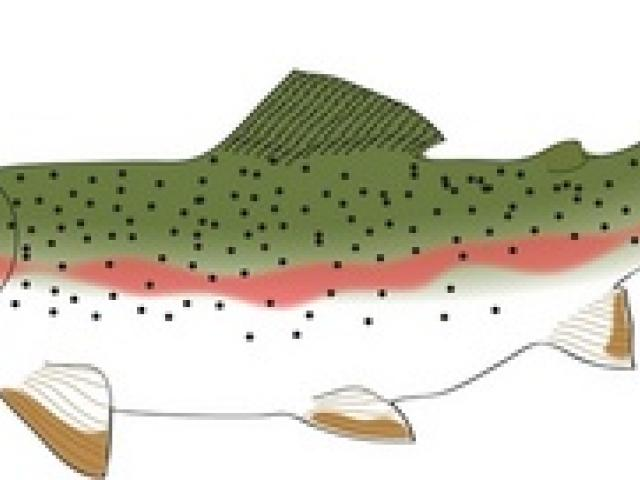 Trout clipart cartoon. Free download clip art