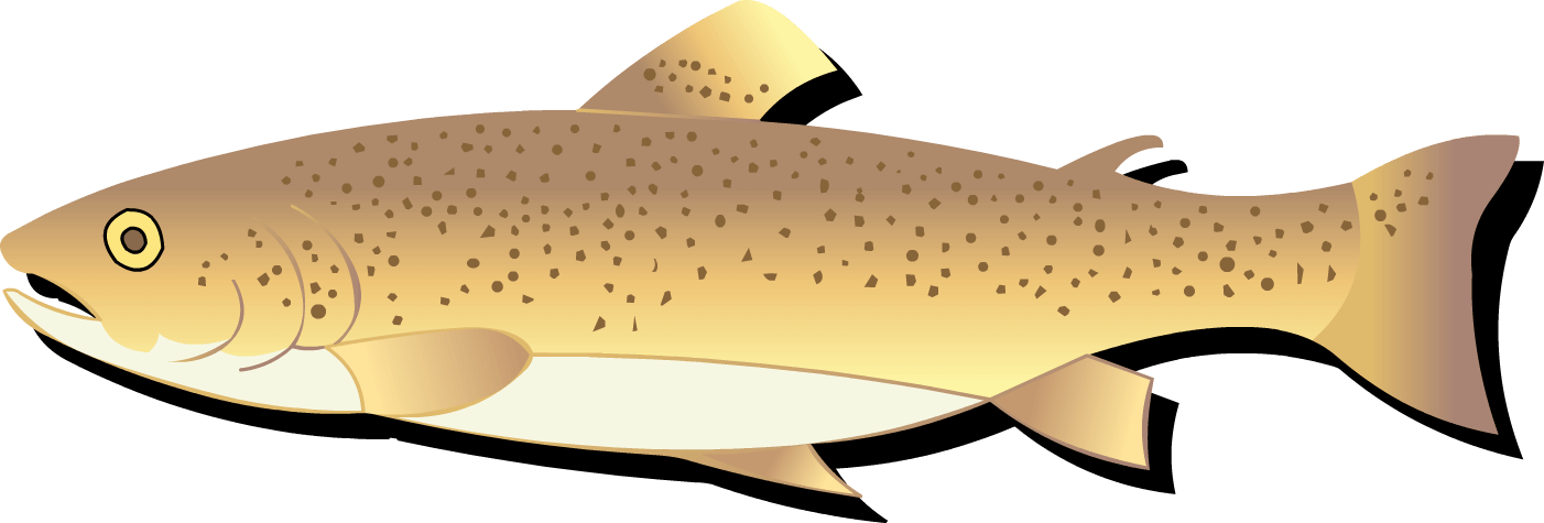 Responsible fishing in western. Trout clipart cool