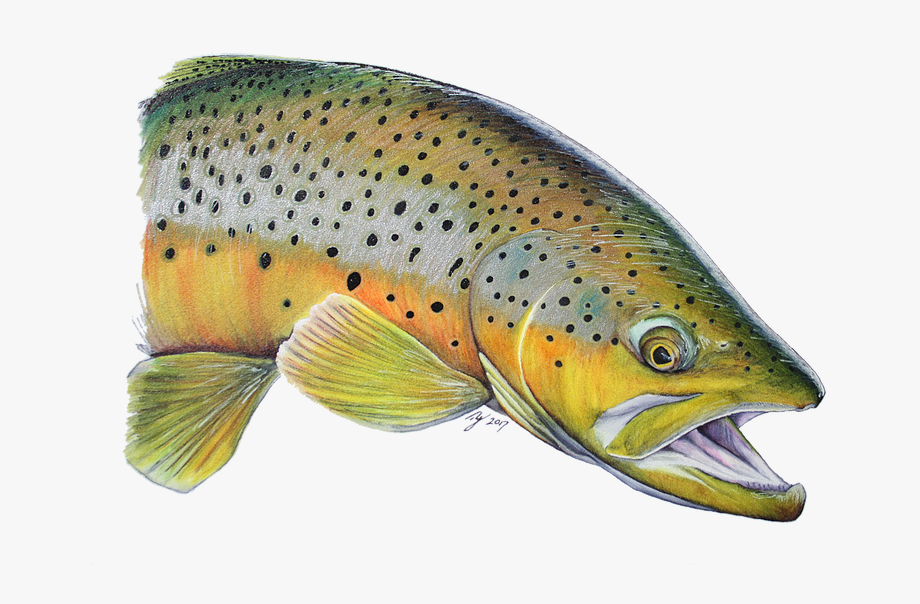 Png free cliparts on. Trout clipart cool