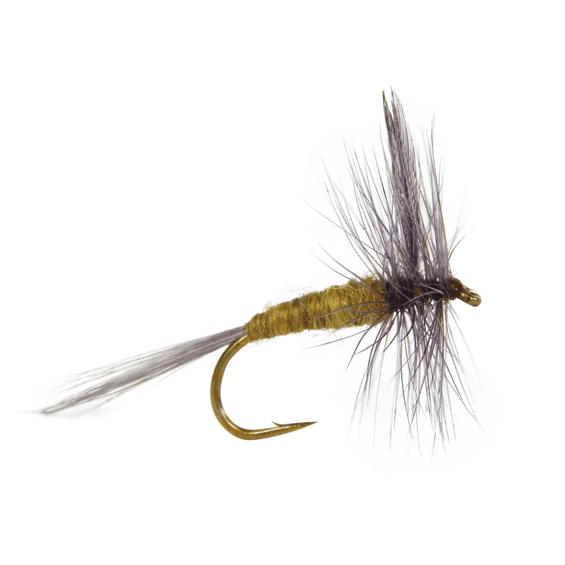 Flies emergers for fishing. Trout clipart dry fly